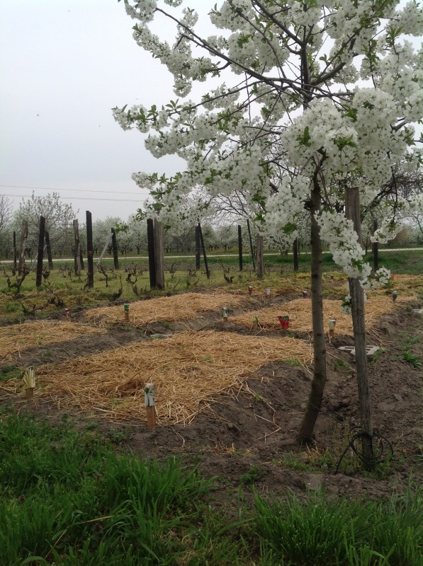 Essay writing service facebook